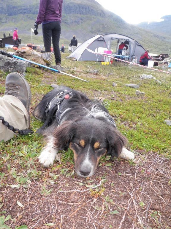 Ein müder Hund